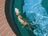 Swimming ferrets fun video