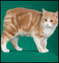 The Manx cat myth