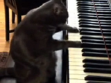 Cat videos, 10 Cutest Cat Moments